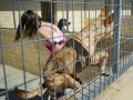 Tausend Hunde Manuela Doerr-1