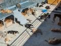 Tausend Hunde Manuela Doerr-2