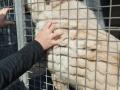 Tausend Hunde Manuela Doerr-4