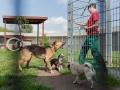 Tausend Hunde Manuela Doerr-5