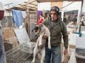 Tausend Hunde Manuela Doerr-7
