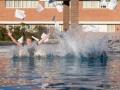 Das ist Tradition: Nach einer erfolgreichen Prüfung springen Martin und sein Freund Alex samt Uniform und Prüfungsunterlagen in den Pool.
